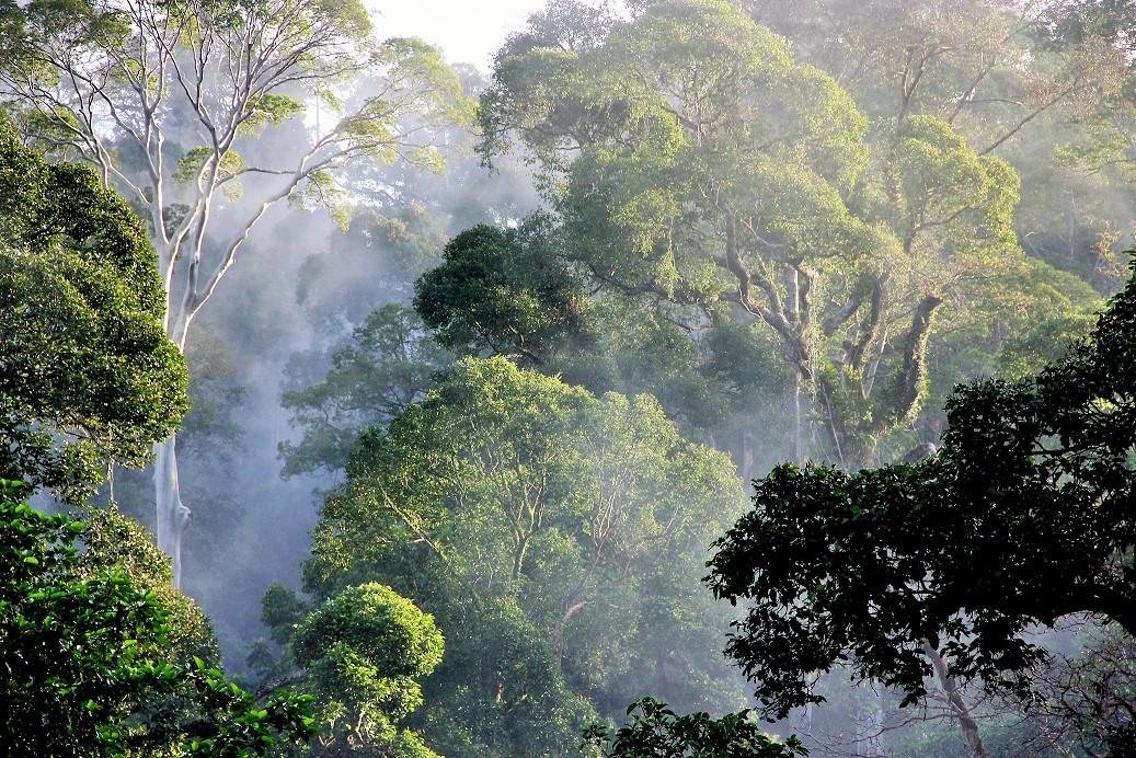 Lembah Danum - Hutan Kelahiran Terakhir Di Sabah