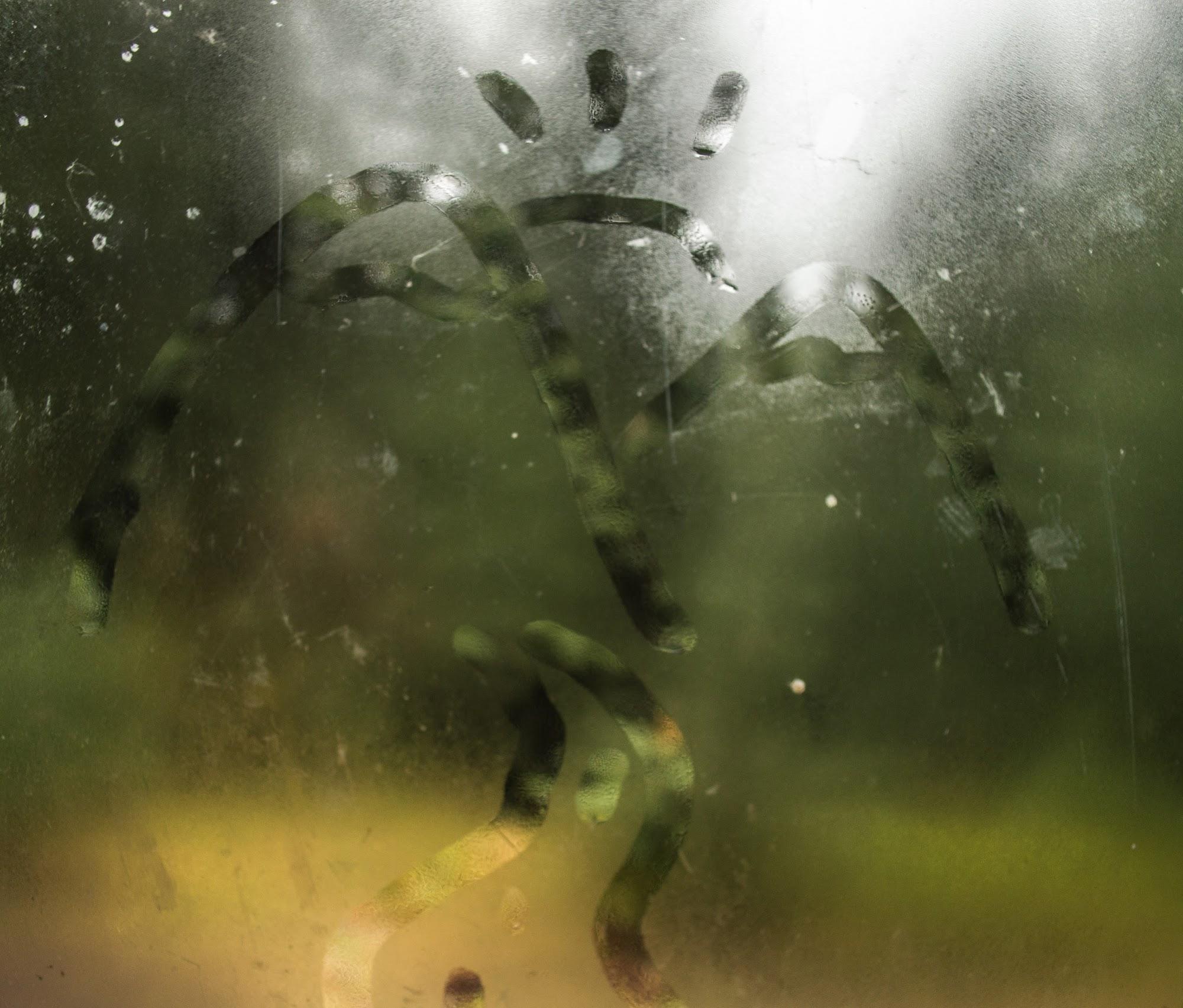 Вікно Притулку