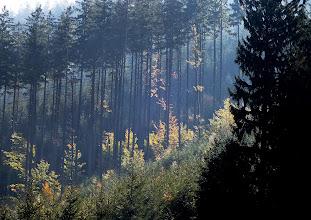 Photo: Fragment z podzimního lesa v Krásné.