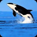 Orca Live Wallpaper icon