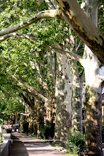 Photo: Day 68 - Plane Trees on the Bank of the Canal in  Esztergom