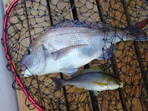 Photo: 真鯛とイサキのダブル!