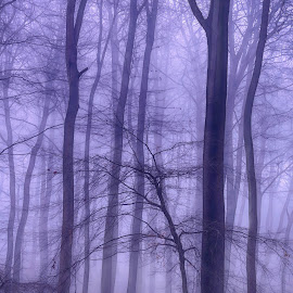 Misty Winter Woodlands by Ceri Jones - Landscapes Forests ( foggy, woodlands, forest, beech, woods, winter, trees, misty )