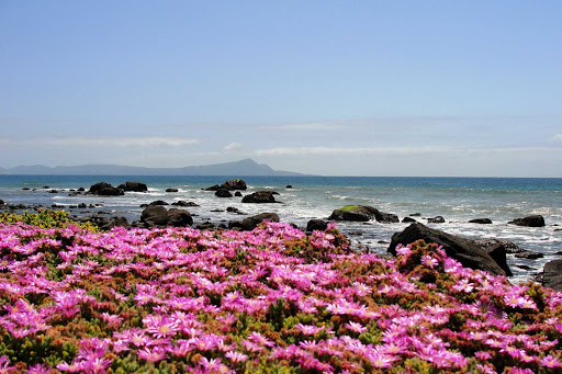 Wildflowers on the grounds of the Punta Morro Hotel overlooking the sea in Ensenada, Mexico.
