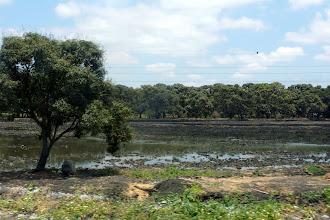 Photo: One of Daule's rice fields.