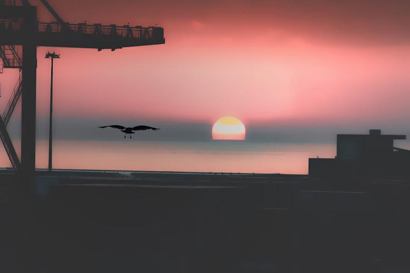il sole e il gabbiano di paolo1954