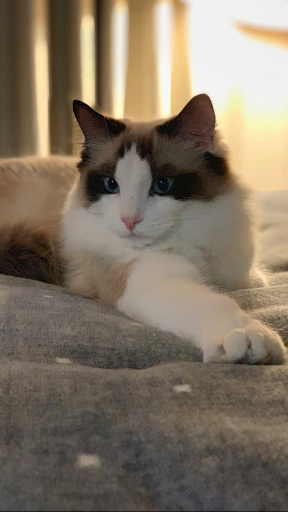 BLACKPINK-Lisa-Cat-Luca-udpate-26-Feb-2019