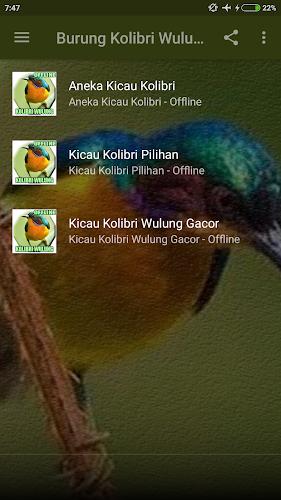 Download Suara Burung Kolibri Wulung Gacor Mp3 Apk Latest Version For Android