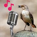 Mockingbird sounds and calls icon