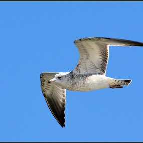 by Linda Brooks - Animals Birds (  )