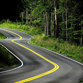 The Road by William Wotring - Transportation Roads ( lines, road, woods, curves )