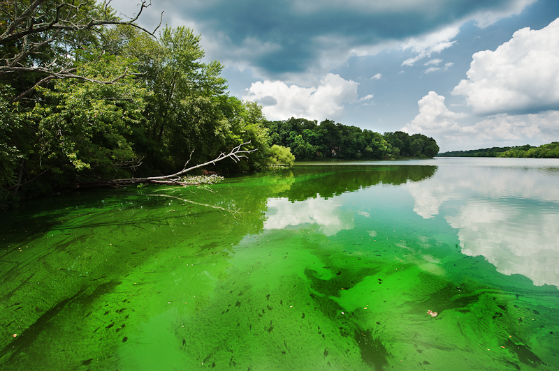 Photo: Green Water
