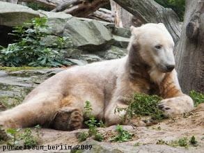 Photo: Knut legt sich mit der Pflanze in Pose ;-)