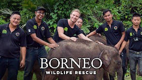 Borneo Wildlife Rescue thumbnail