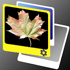 Leaves LWP icon