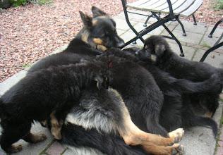Photo: Mama Puck met haar EERSTE nest.