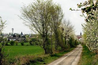 Photo: Borkener Blüten, (c) Hartmut Volze