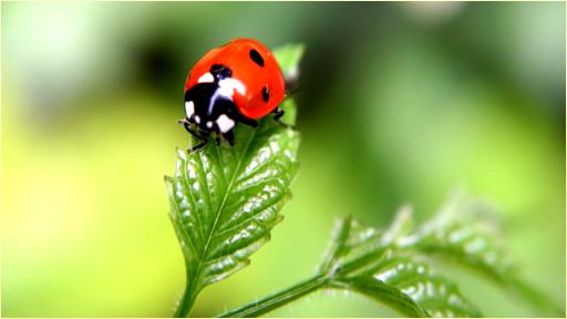 娛樂必備免費app推薦|昆虫の壁紙線上免付費app下載|3C達人阿輝的APP