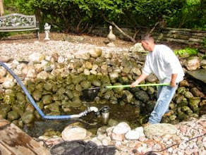 Photo: Goldfish #PondMaintenance Rochester NY, by Acorn Ponds & Waterfalls, to keep your pond looking great throughout the year, be sure to get on our spring pond clean out schedule.  Call us now at 585.442.6373 or fill out this contact form and someone will get back to you soon: www.acornponds.com/spring-maintenance.html  Click here to learn more about Pond Maintenance Services: www.acornponds.com/pond-cleaning.html  To learn more about garden pond or #FishPond spring maintenance, click here: www.facebook.com/notes/acorn-landscaping-landscape-designlightingbackyard-water-gardens/pond-maintenance-rochester-nyfish-pond-cleaning-pittsford-fairport-penfield-ny-b/244212912282505  Click here for a free Magazine all about Ponds and Water Features: http://flip.it/gsrNN  Check out our website www.acornponds.com and give us a call 585.442.6373.  Find us on Houzz here: www.houzz.com/pro/acornlandscapedesign/acorn-landscaping-and-ponds-llc