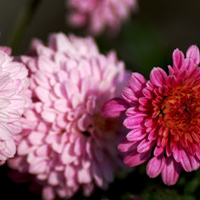 by S S Bhattacharjee - Flowers Flower Arangements