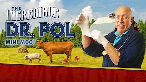 The Incredible Dr. Pol: Mini Moo! thumbnail