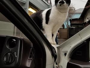 スプリンタートレノ  AE86 SPRINTER TRUENO GT-APEXのカスタム事例画像 ミニハチさんの2019年04月01日20:03の投稿