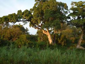 Photo: Lush landscape in Kruger NP / Kruger NP po období dešťů