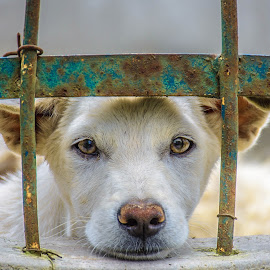 In Between by Kriswanto Ginting's - Animals - Dogs Portraits ( nikon d7100, nikon, dog, portrait, animal,  )