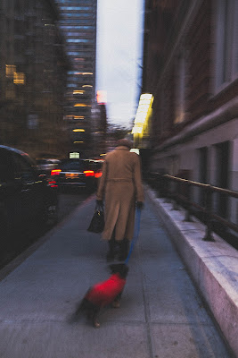 shades of N.Y di francesca bolla