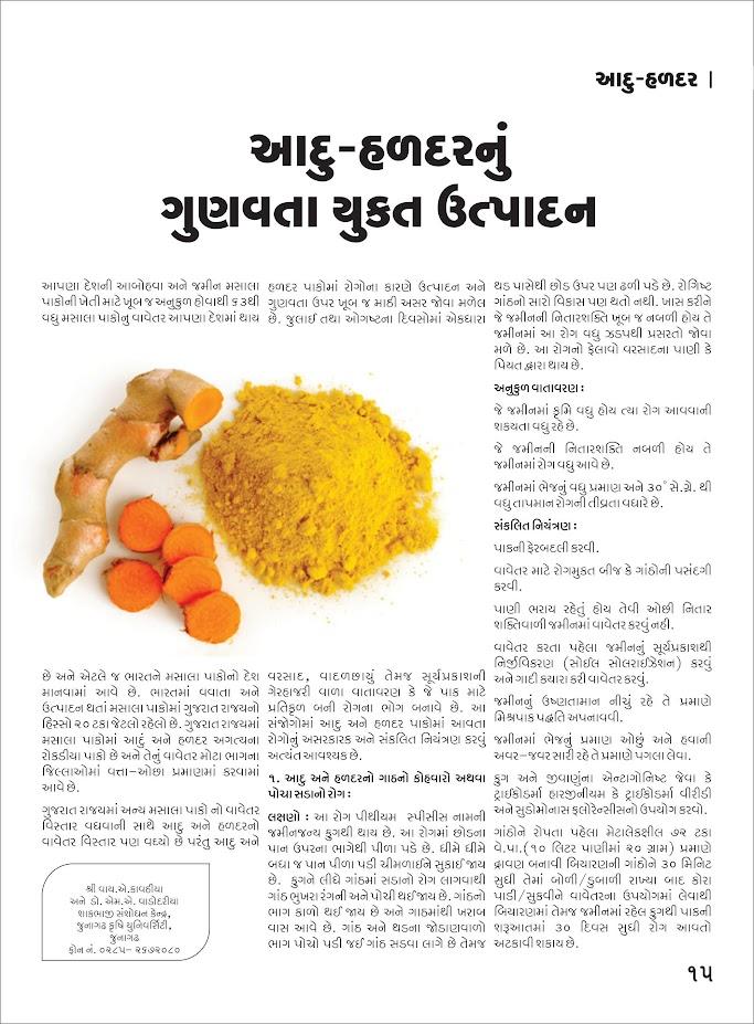 મસાલા પાક: આદુ-હળદરનું ગુણવત્તા યુક્ત ઉત્પાદન