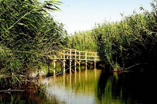 Reserva dos Pantanais de Azraq