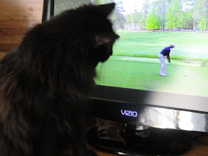 Photo: Amber waits attentively to see the ball take off down the fairway