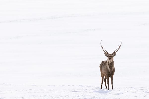 Winter came for House Baratheon! di Alan_Gallo