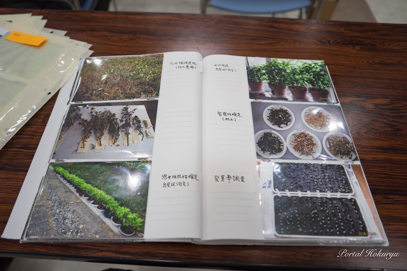 品種改良中の様子 2018年