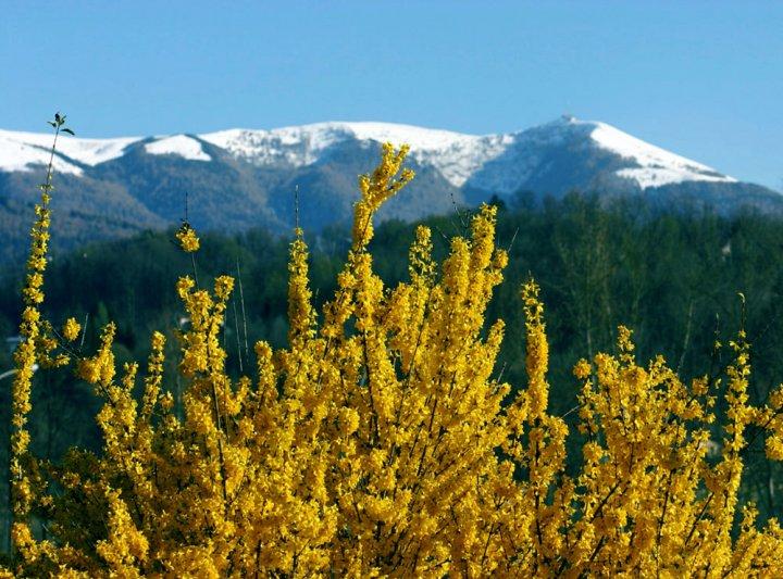l'inverno cede il passo alla primavera di alvise