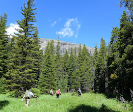 Photo: I set a PR for bush-wacking - over 3 hours. This grassy meadow was a welcome site before we went back into the bush. Eventually we made it up onto East Flattop (horizon).
