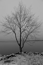 "Photo: A ""monochrome"" day by the lake."