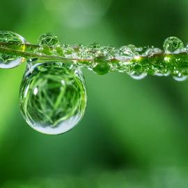 Waterdrops13 by Josip Ćutunić - Nature Up Close Natural Waterdrops ( water, macro, nature, grass, green, morning, waterdrops, garden )
