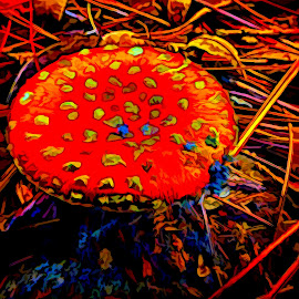 Wild Mushroom by Dave Walters - Digital Art Things ( nature, lumix fz200, digital ar, abstract, colors,  )