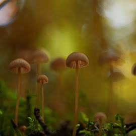 by Rod Fewer - Nature Up Close Mushrooms & Fungi ( mushroom )