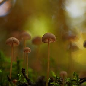 by Rod Fewer - Nature Up Close Mushrooms & Fungi ( mushroom )
