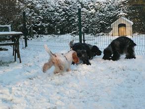 Photo: Les aubépines de La.Vilco sous la neige.