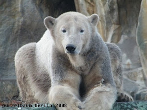 Photo: Einfach Knut :-)