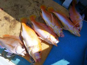 Photo: ぶへーっ! 真鯛とアカイサキ5匹! 総重量6kgぐらいあるでしょうね!
