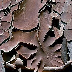 Dried mud by Dan Larsen - Nature Up Close Sand (  )