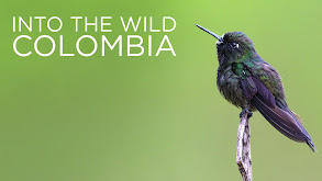 Into the Wild Colombia thumbnail