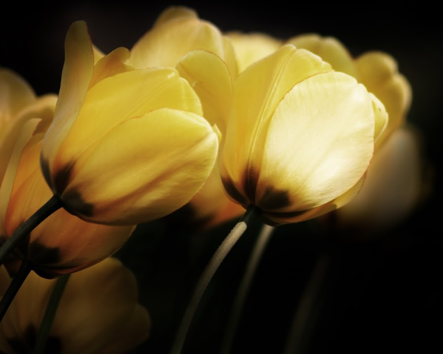 by Zack Brenke - Nature Up Close Flowers - 2011-2013