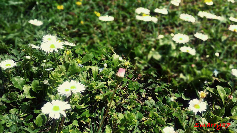 L'ultimo fiore  di Smarry87
