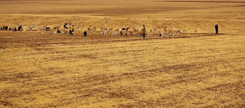 Fields of Gold... di Francesca Malavasi