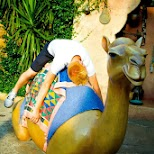 matt passed out on a camel in Urayasu, Tiba (Chiba) , Japan